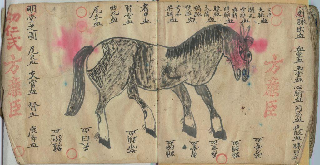 Pferd_ch1.Buch002.jpg
