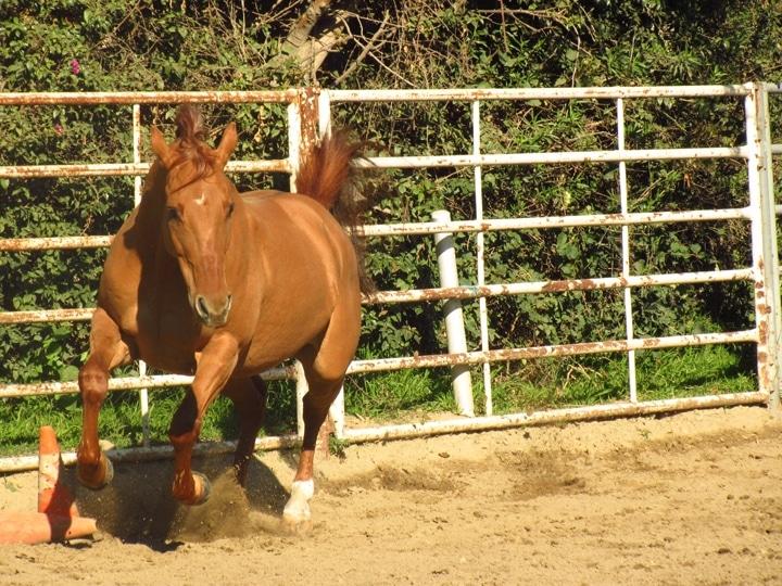Horse.Punkin.jpg