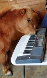 Horse.Keyboard