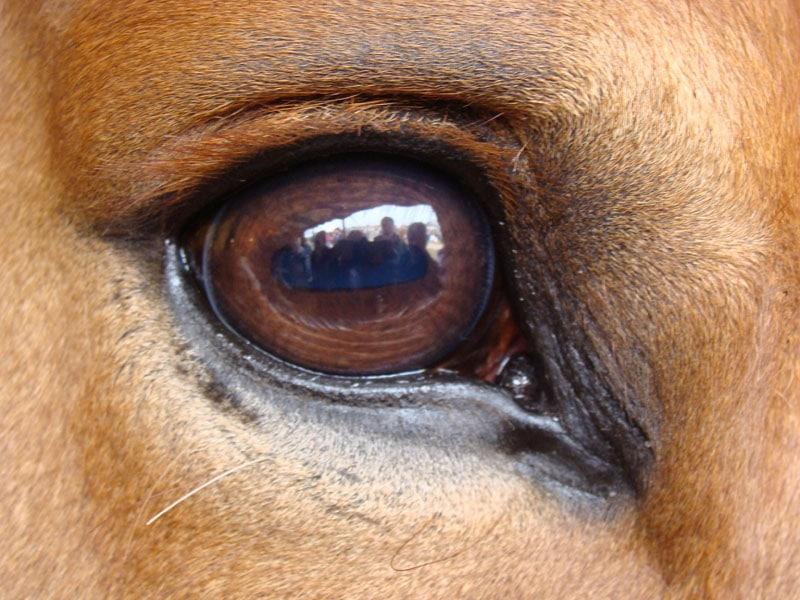 The Eyes Have It – David Ramey, DVM
